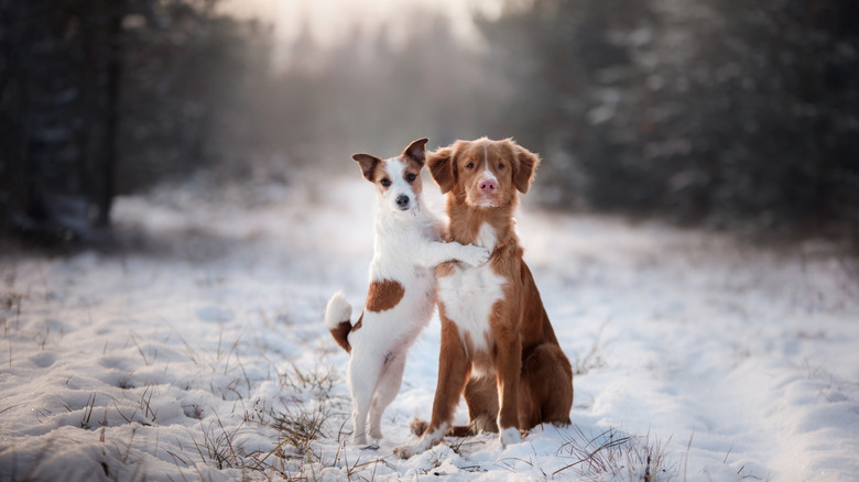 World Famous Dog Names And Why They Are Famous