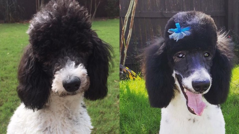 Super Adorable Dogs Before And After Haircuts Natural Hairstyles Runnerswayorg