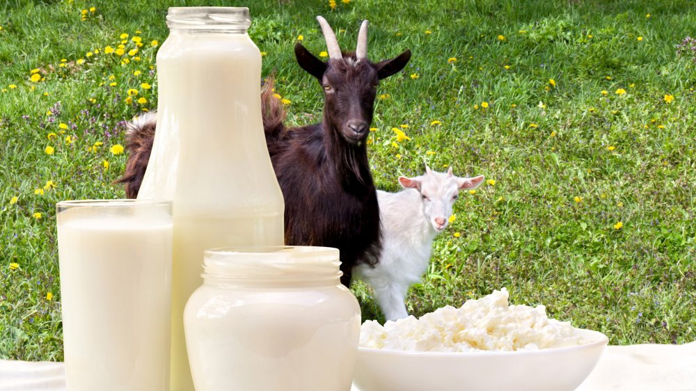 The surprising benefits goat milk has on your skin